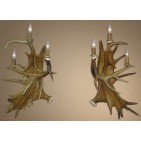 Real Antler Fallow / Moose / Whitetail Deer Sconce SC4